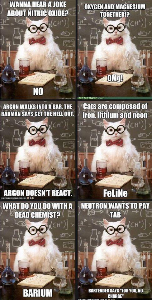 cat meme chemistry