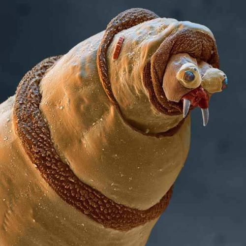 Maggot magnified